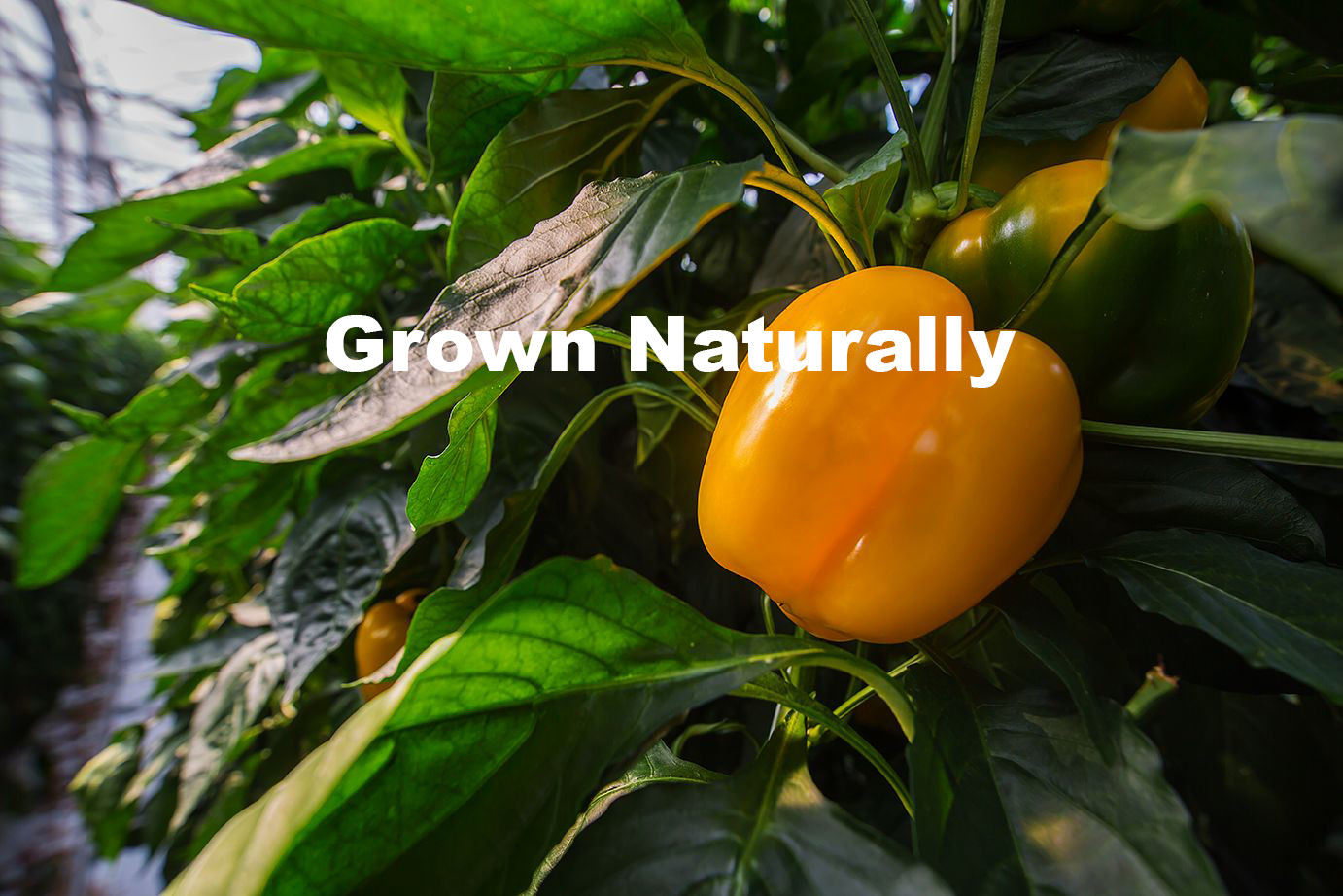 grown_naturally
